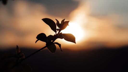 夕日と植物の影