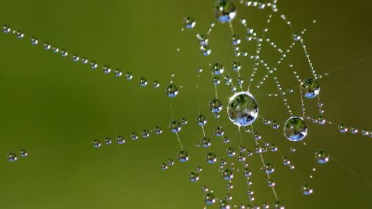蜘蛛の巣に水がついている